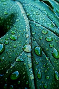 Emerald Green Leaf with Water Drops Dew Drops, Rain Drops, Water Drops, Green Texture, Shades Of Green, My Favorite Color, Green Colors, Teal Green, Colours