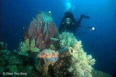 Scuba diving in Guam is alot of fun. The water is so clear and warm. Its a good relaxing day!