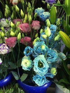 זרים אדירים של הנות ״הפרח״