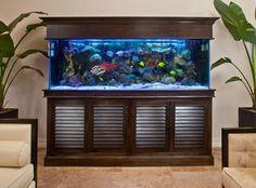 Inspiring Home Stairs Design Ideas With Aquarium Aquarium Stand, Aquarium Cabinet, Reef Aquarium, Aquarium Fish Tank, Wall Aquarium, Aquarium Lighting, Saltwater Fish Tanks, Saltwater Aquarium, Freshwater Aquarium