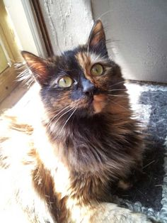 How I Raised Money for My Cat's Huge Vet Bill (and How You Can, Too) | Catster