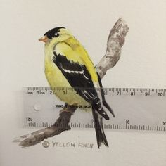 Hello Mr. Yellow Finch...Oh, you don't have a home either? I'll tell All my friends...and maybe they would like to give you a home. Www.instagram.com/shopblueshineart #blueshineart #original #art
