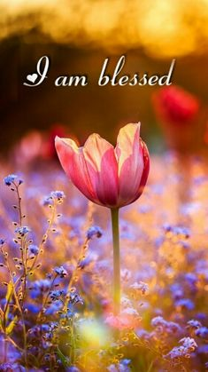I am very blessed 💖 I have a amazing man and beautiful kids😘 Frühling Wallpaper, Flower Wallpaper, Plant Png, Beautiful Flowers, Beautiful Pictures, Spiritual Inspiration, Bokeh, Christian Quotes, Gods Love