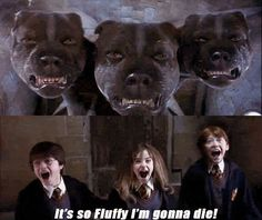 Lol Harry potter humor.... If you hadn't read the first book you wouldn't know what it means.