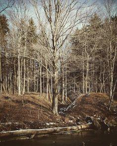Saturday Morning, Country Roads, Sun, Nature, Instagram, Naturaleza, Nature Illustration, Off Grid, Natural