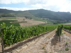 Our vineyard in January 2012