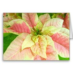 Pink Poinsettia Christmas Cards