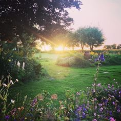 Happy #SussexDay #sussexbythesea #highbrook #sunset #summerevening #countryside #instaphoto #instagood