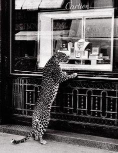 Panthere de Cartier