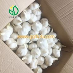 Cold Storage Garlic with good quality in 10kg/carton, logo on carton is available! How To Store Garlic, Fresh Garlic, Pure White, China, Cold, Pure Products, Storage, Purse Storage, Larger