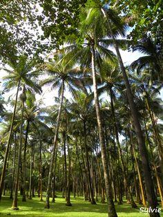 L'Anse des Cascades / Ile de la Réunion https://www.hotelscombined.com/?a_aid=150886 https://www.hotelscombined.com/Place/Tahiti.htm?a_aid=150886