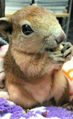 Hey hey hey ... wen haben wir denn da? Ein niedliches süßes knuffiges herzallerliebstes Eichhörnchen - Baby! Kussi für dich mein kleiner Liebli