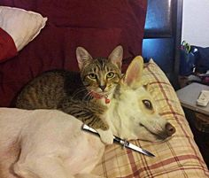 10+ Hilarious Dogs Who Are Terrified Of Cats And Aren't Afraid To Show It