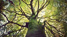 Revelador: 5 Fatos fascinantes sobre a árvore da vida que a religião esconde de toda a humanidade ~ Sempre Questione