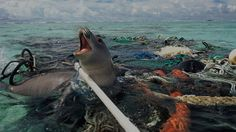 What is Water Pollution? The Sources and Impacts of Water Pollution Ocean Pollution, Plastic Pollution, Environmental Pollution, Environmental Posters, Orcas, Hawaiian Monk Seal, What Is Water, Great Pacific Garbage Patch, Whales