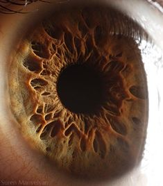 Even when an iris's color is a uniform brown, the incredible variations of the fibrous tissue that covers it can be seen in an image like this. This tissue, known as the stroma, is connected to the muscles that cause our irises to contract and expand over the pupil, depending how much light needs to be let in.    The Alien Landscapes of Human Eyes in Macro - Socialphy