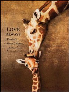 P Graham Dunn Love Always Giraffe Mom Kiss 16 x 12 Wood Wall Art Sign Plaque Giraffe Pictures, Animal Pictures, Giraffe Art, Giraffes, Baby Shower Giraffe, Cute Baby Animals, Wild Animals, Animal Quotes, Science And Nature