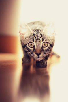 #cats #meow #kitty