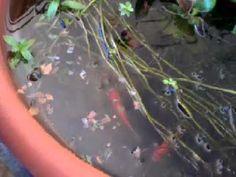 Bonsai pond - YouTube