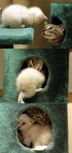 "Cat and kitten ""I told you I'd fit!"" #CuteCat #Cats"