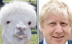 Okay so not quite a dog but we thought this was too good to ignore #borisjohnson #boris #hair #bozza #lookalikes #nose #face