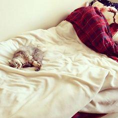 . おとを探せ🐱🔍👓💓 . #ねこ#猫#cat#にゃんすたぐらむ #スコティッシュフォールド  #ねこあつめ#ねこ好き#猫好きさんと繋がりたい #ねこ部#cute#ねこすたぐらむ#愛猫#癒し#可愛い#love #instacat#instapet#catstagram#petstagram  #mypet#ilovemycat#ilovemypet #japanesecat#japan#fukuoka#福岡 #scottishfold#followme#l4l#ペコねこ部