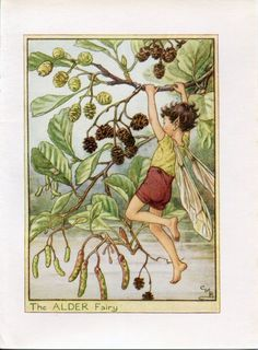 Alder Flower Fairy Vintage Print, c.1950 Cicely Mary Barker Book Plate Illustration by TheOldMapShop on Etsy