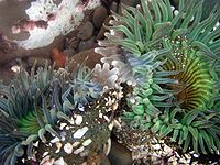 anenomes Coral Bleaching, Sea Anemone, Garden Terrarium, Tide Pools, Rock Pools, Biomes, Pictures To Paint, Clone Wars, November