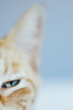 """""""Cats' hearing apparatus is built to allow the human  voice easily to go in one ear and out the other."""" --Stephen Baker"""