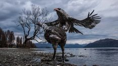 A Kiwi artist has resurrected two extinct native birds using cutlery, hot water cylinders and horse shoes. Abstract Sculpture, Wood Sculpture, Bronze Sculpture, Metal Sculptures, Scrap Metal Art, Found Art, Art Archive, Bald Eagle, Buy Art