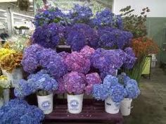 Maybe make the blue and purple hudrangea's the flowers we use