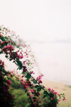 branche de fleurs