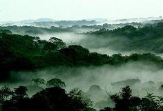sublime photo de la foret du Congo