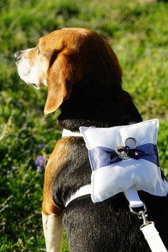 to Include Pets in your Wedding: Best Tips and Ideas Ever! Ring bearer dog harness with pillow and matching leash. Pick the accent ribbon color. Via Etsy.Ring bearer dog harness with pillow and matching leash. Pick the accent ribbon color. Via Etsy. Dog Wedding Attire, Wedding Engagement, Wedding Rings, Husky Corgi, Perfect Wedding, Dream Wedding, Dog Bowtie, Dog Harness, Wedding Pictures