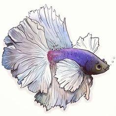 How to Draw A Loch Ness Monster Bildergebnis für Betta-Fischzeichnung Watercolor Fish, Watercolor Animals, Watercolour, Fish Drawings, Cute Drawings, Beta Fish Drawing, 3d Drawing Images, Drawing Ideas, Fish Sketch