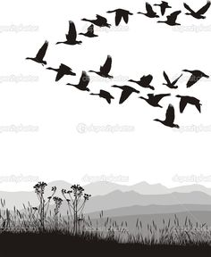 Find Black White Illustration Flying Geese stock images in HD and millions of other royalty-free stock photos, illustrations and vectors in the Shutterstock collection. Cheetah Background, Black And White Background, Black And White Drawing, Black And White Illustration, Goose Drawing, Fly Drawing, Bird Silhouette, Silhouette Vector, Flying Geese