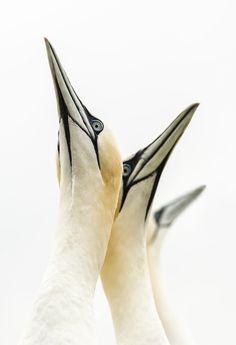 Gallery: British Wildlife Photography Awards | We Love This Book