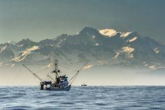 Die unberührte Landschaft und das kalte, klare Wasser des Nordostpazifik sind der ideale Lebensraum für Wildlachse, Kabeljau, Heilbutt und andere Weißfische, sowie Muscheln und Krabben.