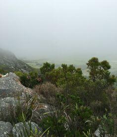Mist of nature