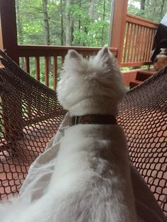 Chilling in @hammock with the @westie