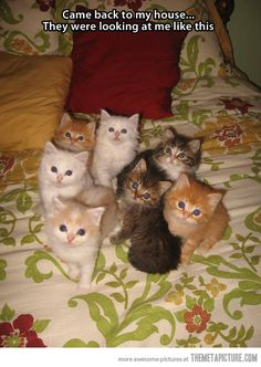 This was actually what Celia and Felix saw upon their return from Brazil. Surprise! Pam had more kittens!