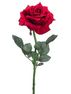 Diana Open Rose in Red | Wedding Flowers