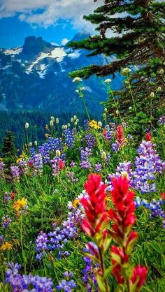 Wonderful Wild Flowers wallpapers Wallpapers) – Wallpapers For Desktop Beautiful Photos Of Nature, Nature Pictures, Amazing Nature, Beautiful Landscapes, Beautiful World, Beautiful Flowers, Beautiful Places, Beautiful Pictures, Landscape Photography