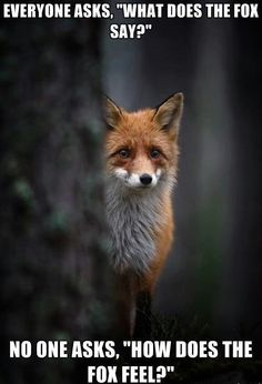 How does the fox feel? Lol