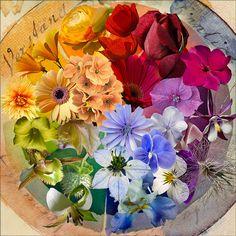 the color wheel ... by v.sassy .., via Flickr