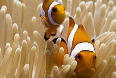 The reality of 'Finding Nemo's' marine life - The Washington Post