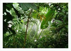 "Photo Wallpaper ""Jungle"" Wall Mural Design"