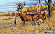 Artist Cynthie Fisher Unframed Whitetail Deer Print The Bryant Buck | WildlifePrints.com
