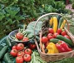 Organic Gardening With Raised Beds | Organic gardening tips for beginners