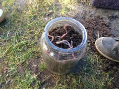Regenwürmer beobachten leicht gemacht... Biology, Kindergarten, Plants, Spur, Woods, Gardens, School, Experiments Kids, Mother Nature